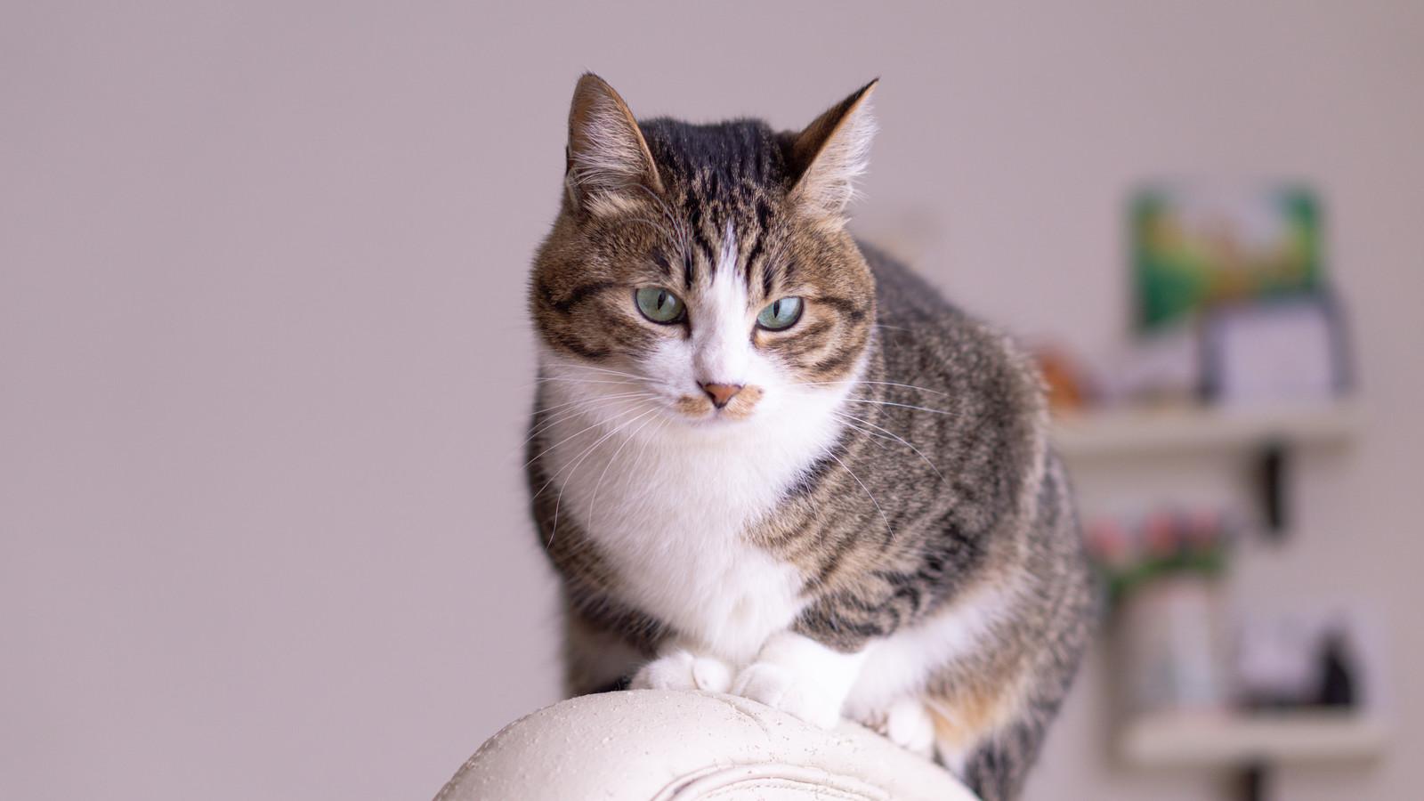 ダレノガレ明美,猫,種類