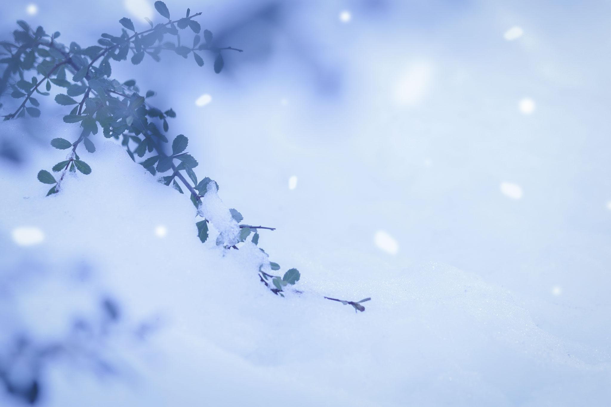 札幌雪まつり,海外の反応,海外の雪祭り