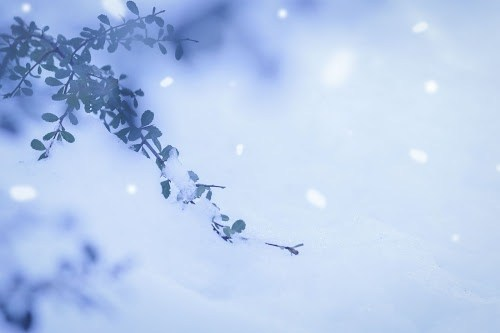 札幌雪まつり2020,すすきの会場,混雑回避,方法,所要時間