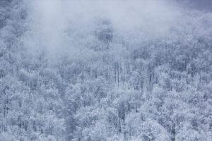 札幌雪まつり2020,混雑回避,方法,所要時間