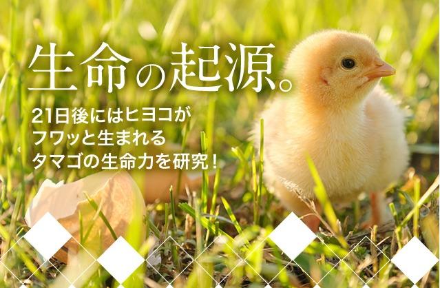 FUSSA(フッサ)育毛剤,口コミ