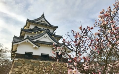 彦根城,場所,ひこにゃん,登場時間,登場場所