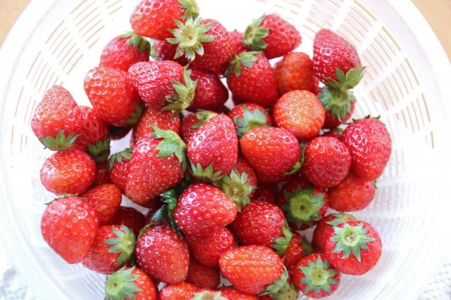 あまりん,イチゴ,通販,お取り寄せ,ごはんジャパン