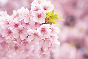 ドラゴン桜,ヤンキー理事長