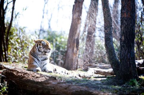 敬老の日,ズーラシア,動物園